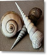 Seashells Spectacular No 24 Metal Print by Ben and Raisa Gertsberg