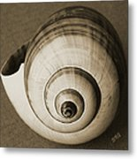 Seashells Spectacular No 25 Metal Print