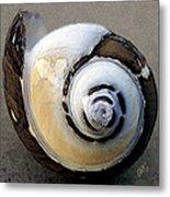 Seashells Spectacular No 3 Metal Print