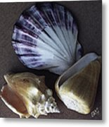 Seashells Spectacular No 30 Metal Print