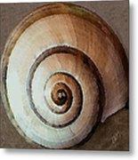 Seashells Spectacular No 34 Metal Print