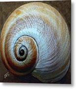 Seashells Spectacular No 36 Metal Print