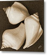 Seashells Spectacular No 4 Metal Print