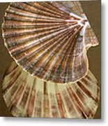 Seashells Spectacular No 54 Metal Print