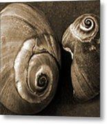 Seashells Spectacular No 6 Metal Print
