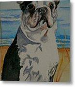 Seaside Harold Metal Print