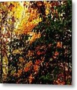 Season Of Color Metal Print