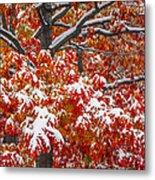Seasons Of Change Metal Print