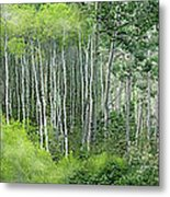 Seasons Of The Aspen Metal Print