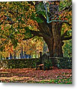 Seated Under The Fall Colors Metal Print