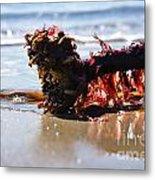Seaweed 2 Metal Print