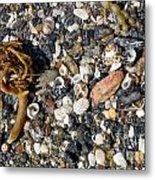 Seaweed And Shells Metal Print