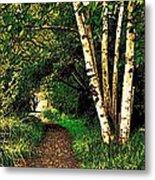 Sechelt Marsh Path Metal Print