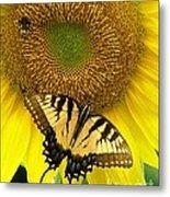 Secret Lives Of Sunflowers Metal Print