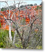 Sedona Arizona Dead Tree Metal Print