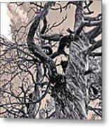 Sedona Arizona Ghost Tree In Black And White Metal Print