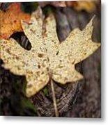 Sedona Leaf 12 Metal Print