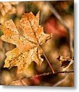 Sedona Leaf 14 Metal Print