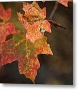 Sedona Leaf 25 Metal Print