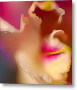Seductive In Pink And White Metal Print