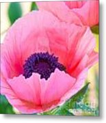 Seductive Poppy Metal Print