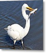 See My Catch Metal Print