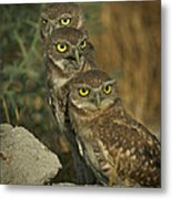 See No Evil - Hear No Evil - Speak No Evil Metal Print