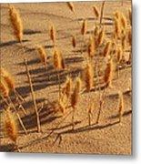Seed And Sand Metal Print
