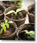 Seedlings  Metal Print