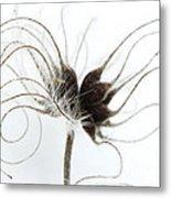 Seeds Metal Print by Anne Gilbert