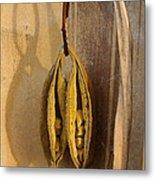 Seeds In Warm Coat Metal Print