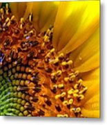 Seeds Of Sunshine Metal Print