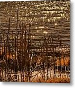 Seegrass Riple Metal Print