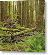 Seeing Forest Through The Trees Metal Print