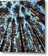Seeing The Forest Through The Trees Metal Print