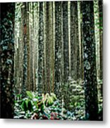 Seeing The Forest With The Trees Metal Print