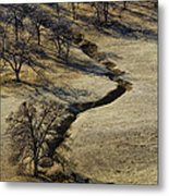 Seeking Shade Metal Print