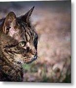 Senior Cat Metal Print