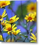 Sensational Summer Metal Print