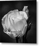 Sensory Satisfaction Metal Print