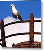 Sentinel Sea Gull Metal Print