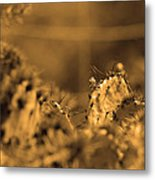 Sepia Cacti Close Up Metal Print