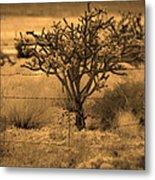 Sepia Cacti Roadside Metal Print