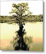 Sepia Cypress Chicot Sp Louisiana Metal Print