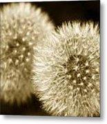 Sepia Dandelions Metal Print
