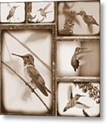 Sepia Hummingbird Collage Metal Print