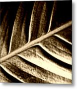 Sepia Leaf Metal Print