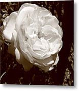 Sepia Rose Metal Print