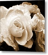 Sepia Roses With Rain Drops Metal Print by Jennie Marie Schell