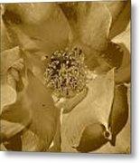 Sepia Toned Rose Close Up Metal Print